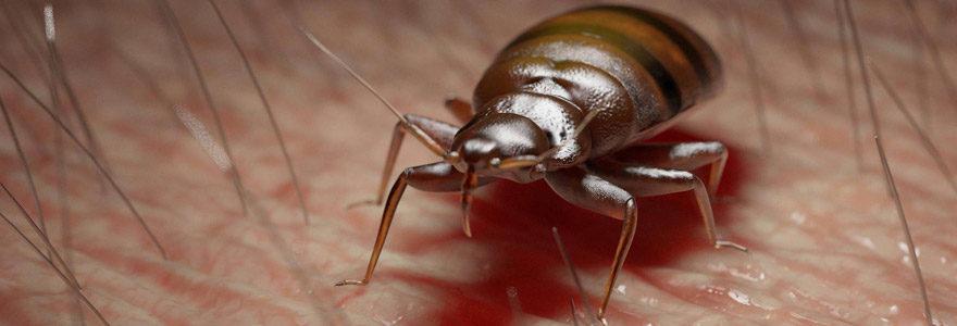 débarrasser des insectes